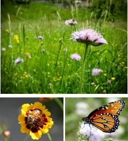 wildflowers, bee, butterfly