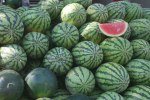 watermelons-2961279685989cR84